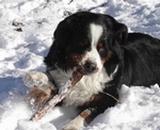 Op'tracken à la neige
